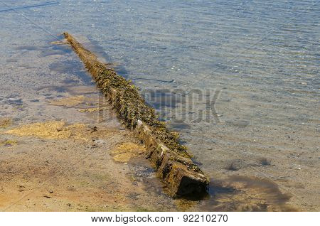 Waterlogged Timber