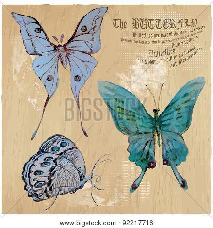 Butterflies - An Hand Painted Vector, Converted