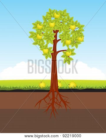 Aple tree with horse
