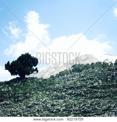 Pine Tree And Rocks. Distant Mountain Peaks On The Background. Aged Photo. Mountain Valley Near Taht