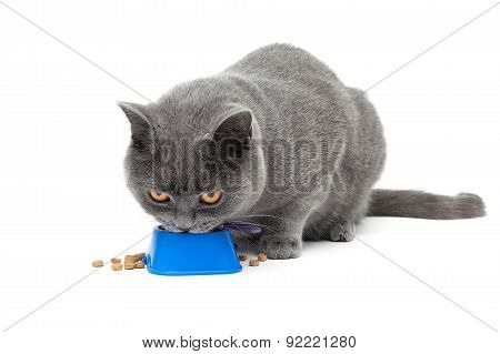 Cat Eating Food From A Bowl Isolated On White Background