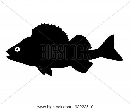 Silhouette Of The Fish Perch