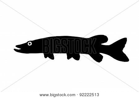 Silhouette Of The Fish Pike