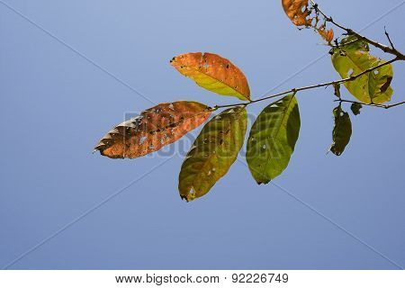 Beautiful   leaves  color  change.