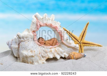 Newborn baby sleeping inside a seashell on a beach