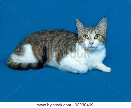 Tricolor Striped Cat Lies On Blue