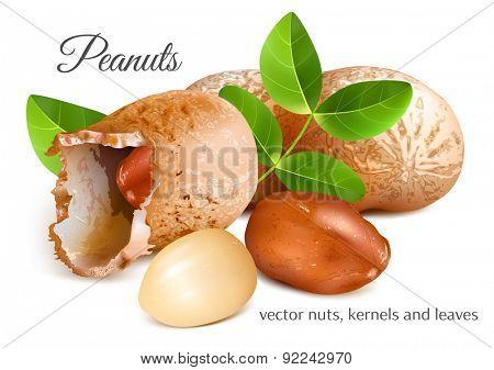 Peanuts, kernels and leaves. Vector illustration