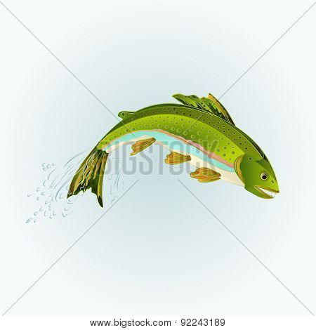 Rainbow Trout Jumping Vector