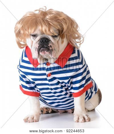 humanized dog dressed with wig and shirt on white background