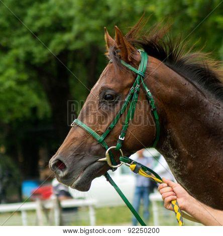 Portrait Of Horse.