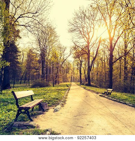 Beautiful spring landscape. Bench and footpath in morning park