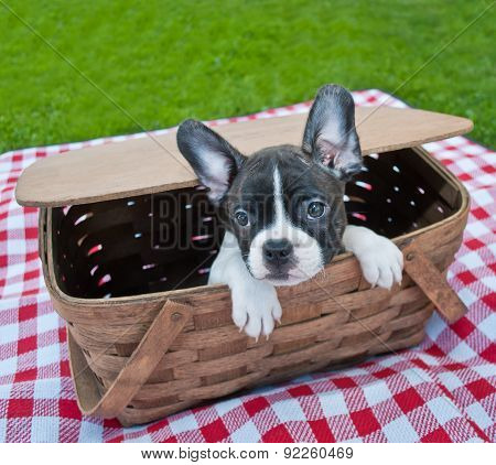 Puppy Picnic