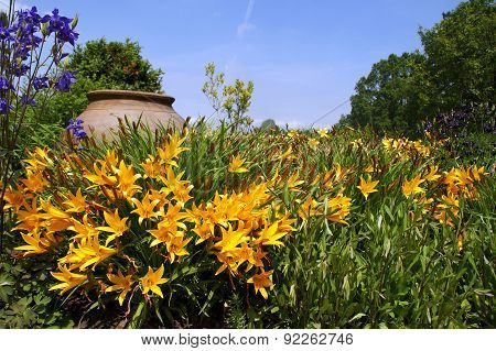 Yellow Daylily shining in front of an ancient amphora