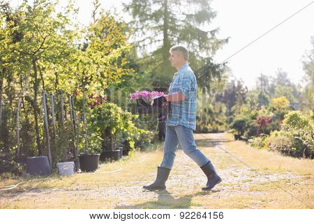 Full length side view of gardener walking while carrying crate of flower pots in garden