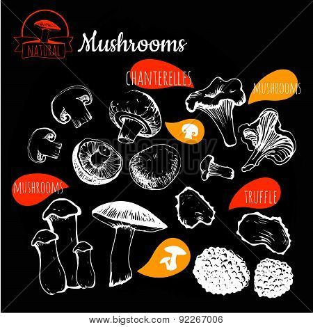 Vector Illustration On Blackboard. Hand Drawing Set Of Mushrooms.
