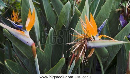 Interesting Orange Tropical Flower Pair