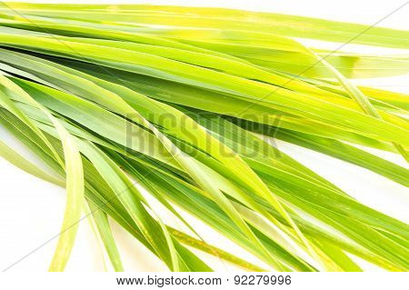 Close Up Green Fresh Lemongrass Leaf Isolated On White