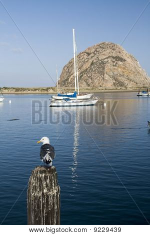 A single seagull and Morro Rock at Morro Bay