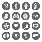 image of human stomach  - Set of vector Medical Icons with human organs in flat style - JPG