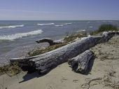 pic of driftwood  - An old piece of driftwood lies along the beach of Lake Michigan such logs are a common sight. ** Note: Visible grain at 100%, best at smaller sizes - JPG