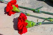 stock photo of carnation  - Two flower Two red carnations lay on the white surface  - JPG