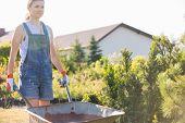 picture of wheelbarrow  - Female gardener pushing wheelbarrow at plant nursery - JPG
