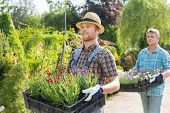 pic of plant pot  - Male gardeners walking while carrying flower pots in crates at plant nursery - JPG