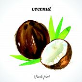 image of exotic_food  - Watercolor coconut - JPG