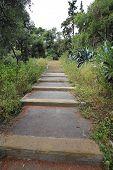 picture of vegetation  - Walking Path Up Hill in Mediterranean Vegetation - JPG