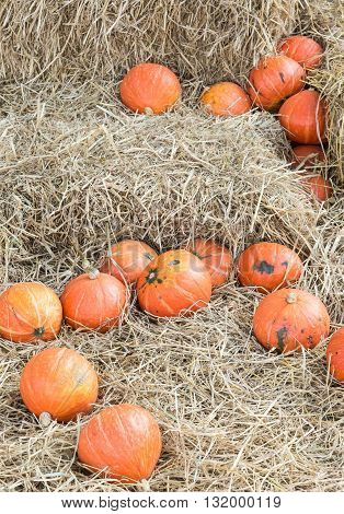 Ripe pumpkin pile on the hay for decoration in the countryside farm.