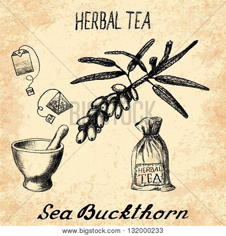 Sea buckthorn herbal tea. Set of vector elements on the basis hand pencil drawings. Sea buckthorn tea bag mortar and pestle textile bag. For labeling packaging printed products