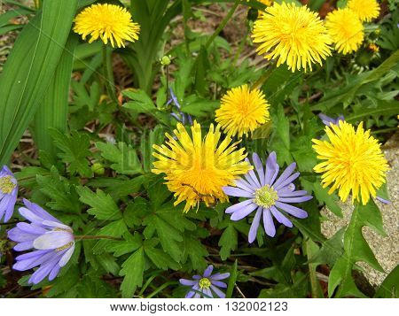 Yellow and purple flower in a garden.
