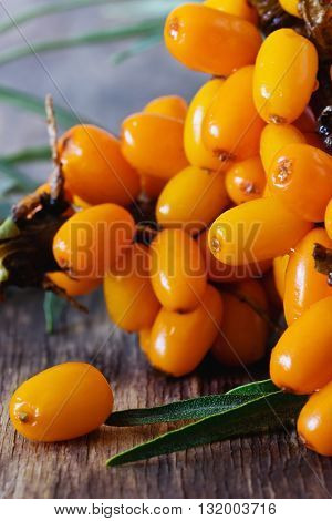Organic ripe sea buckthorn on a wooden background. Bio healthy fruits. Selective focus