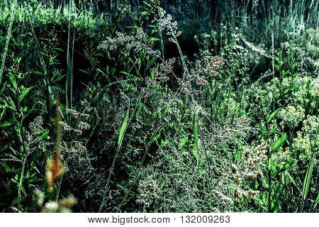 Beauty brilliance dew on dark green morning grass
