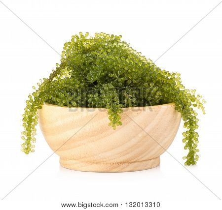 Umi-budou Seaweed Healthy sea food. Oval sea grapes seaweed. Healthy Food Close up Green Caviar on white background.