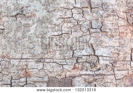 Closeup cracked skin of trunk of tree texture background