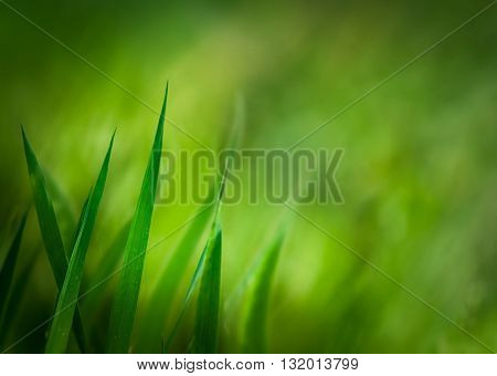 Spring background. Grass with copyspace. Floral background.