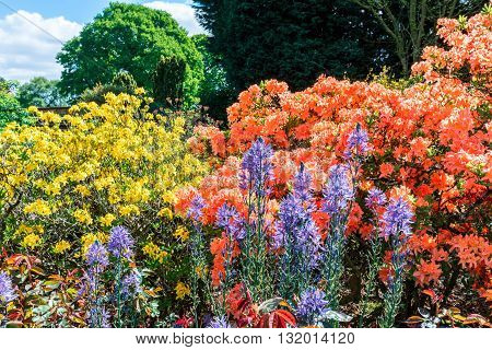 Flowering plants and shrubs in an English garden.