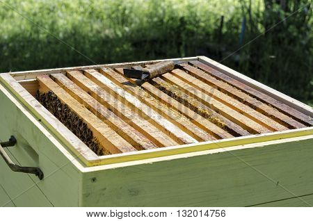 Bee hive and bee frame with bees inside uly