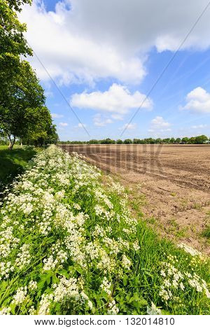 Dich With Weed Flowers In Spring Time