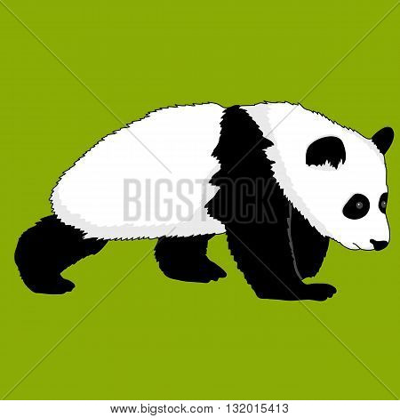 realistic panda bear go green background vector illustration