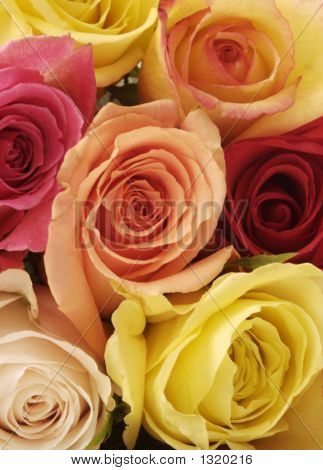 Bright, Beautiful Mixed Roses