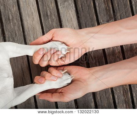 Dog Handshake