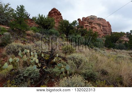 Beautiful red rock landscape and cactus in Sedona