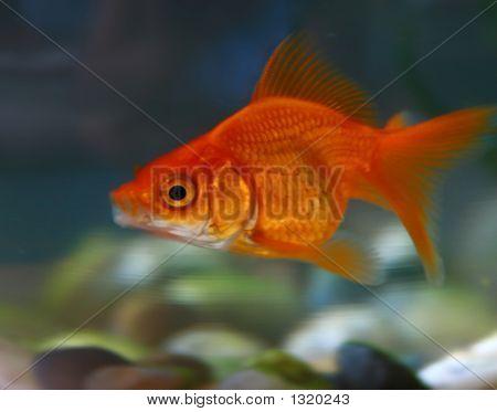 Fishy Story