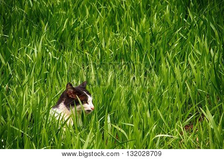 white and black cat in green grass