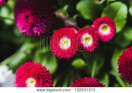 the Red flowers on a background of lush green