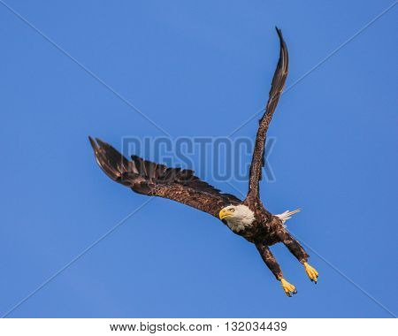 An eagle flying high in the sky
