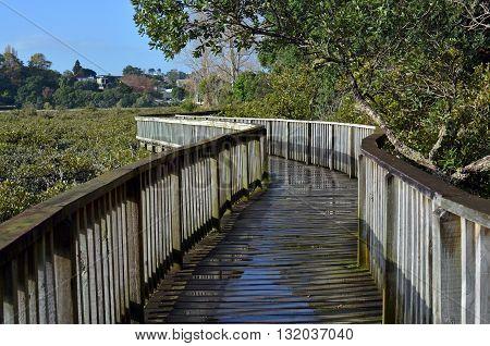 Popular and spectacular harbourside wooden walkway around Hobson Bay Remuera Auckland New Zealand