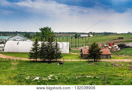 dairy farm landscape from the hill at spring
